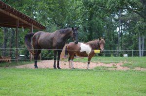 Mr. Cash & Pony Dude