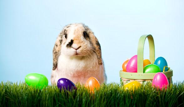 CNH Easter Egg Hunt