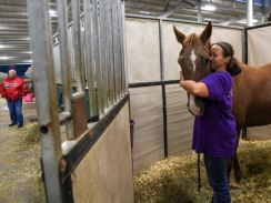 Hurricane-Irma-horse-shelter